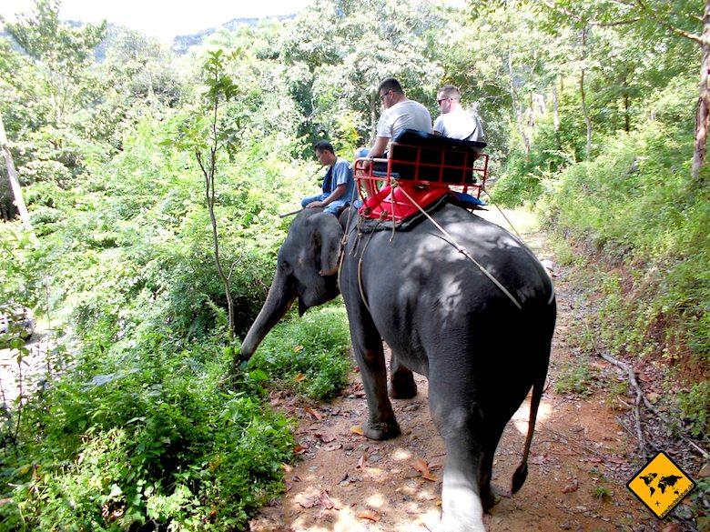 Koh Samui Attraktionen Elefanten reiten