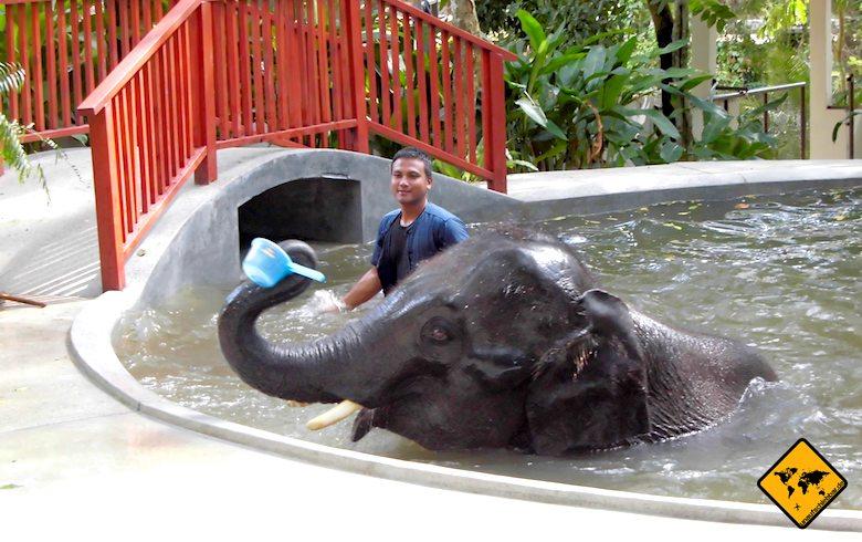 Koh Samui Attraktionen Elefantenbad