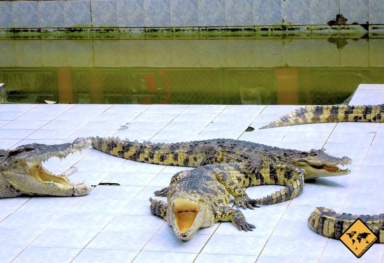 Koh Samui Attraktionen Krokodilfarm