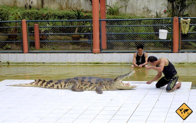 Koh Samui Attraktionen Krokodilshow