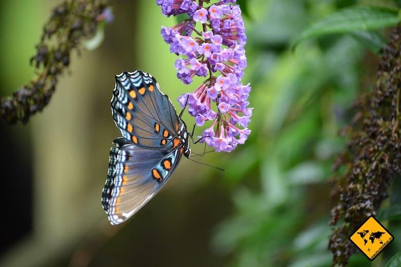 Koh Samui Sehenswürdigkeiten Butterfly Garden