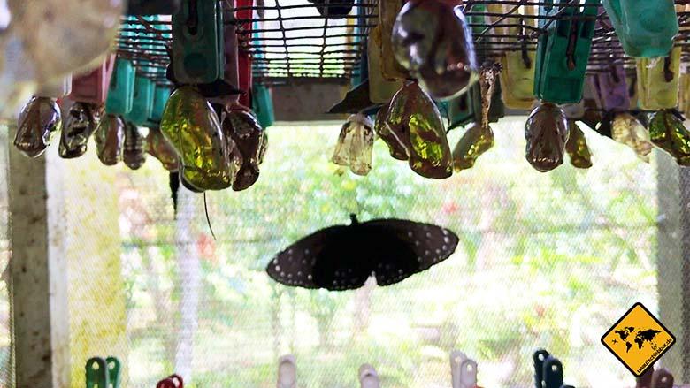 Kokons Butterfly Park Bali