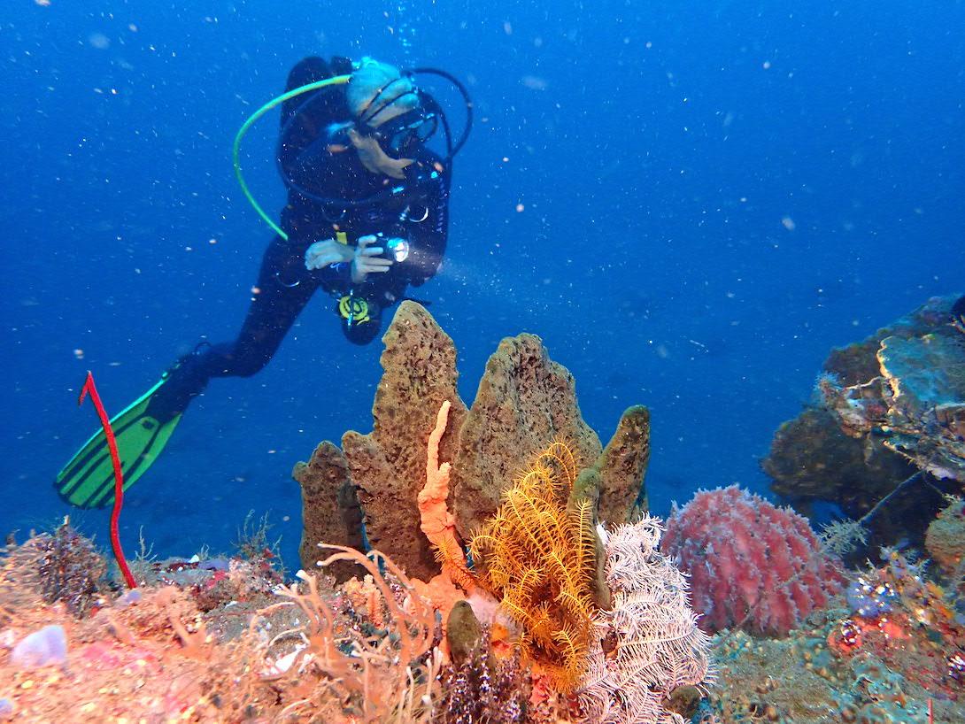 Korallen Bali tauchen