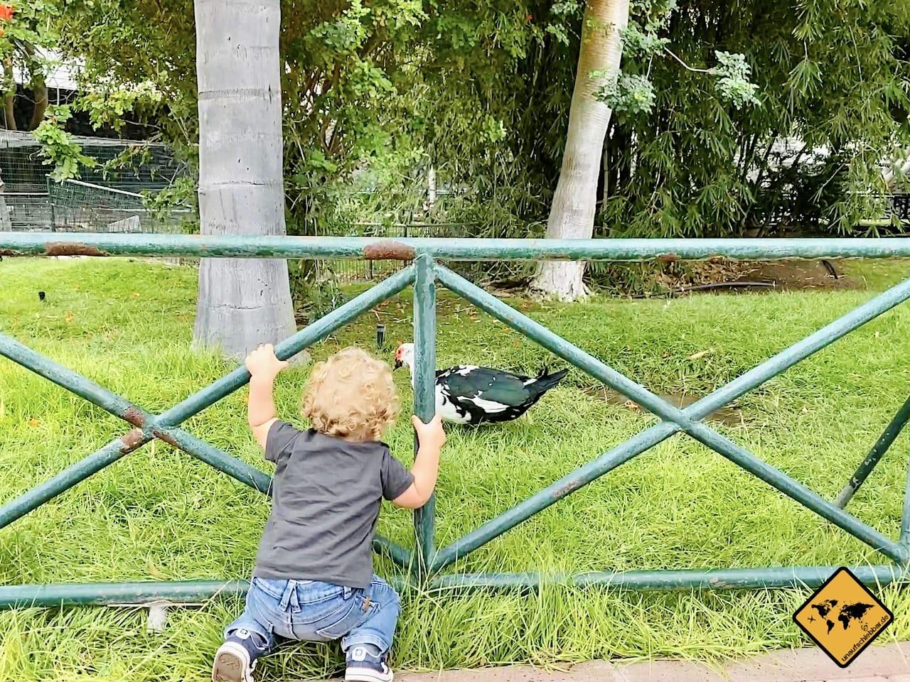 La Gomera mit Kindern Vogelpark Hermigua