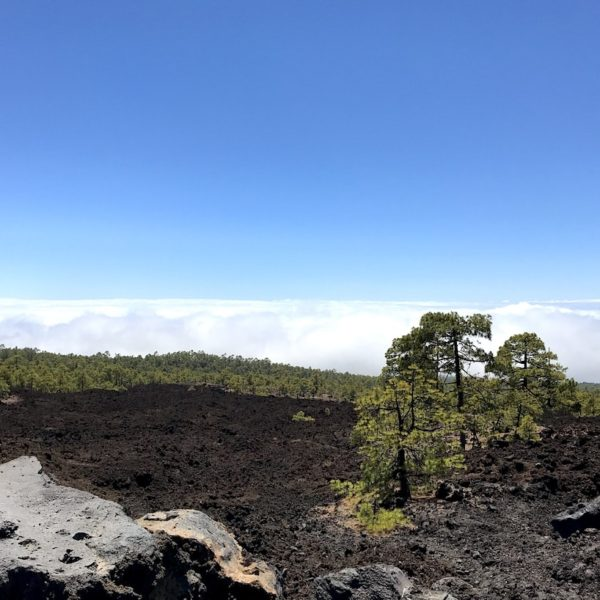 Landschaft Pinar Chio Teide Nationalpark