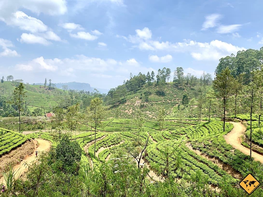 Landschaft Teeplantagen Zug von Kandy nach Ella