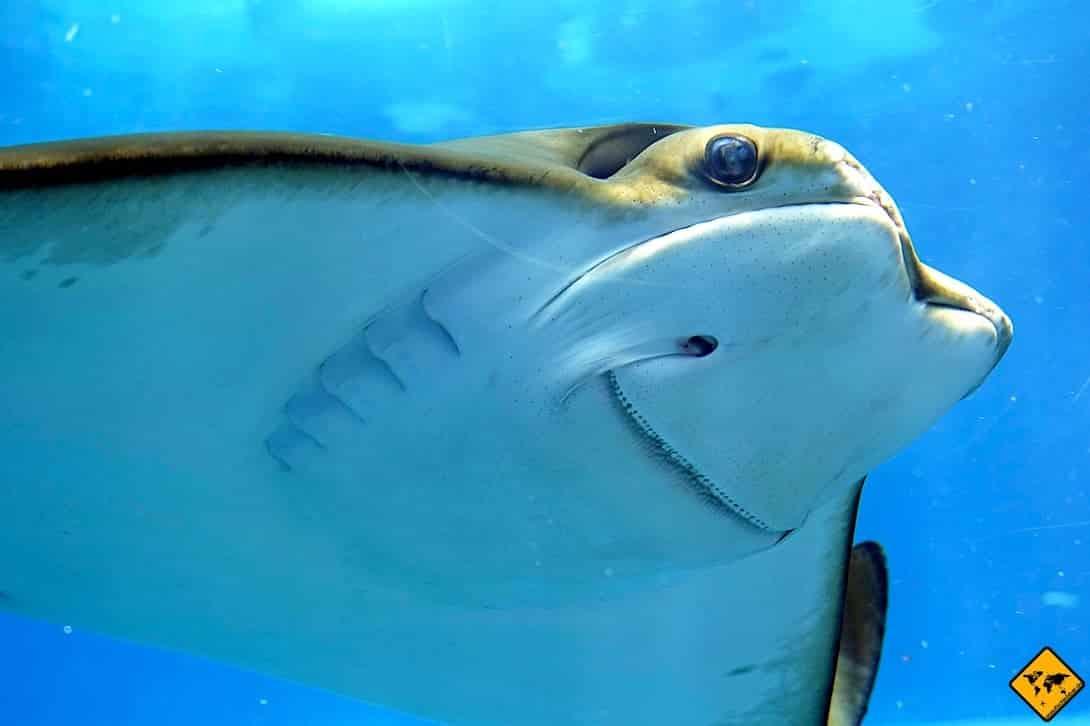 Lanzarote Aquarium Costa Teguise