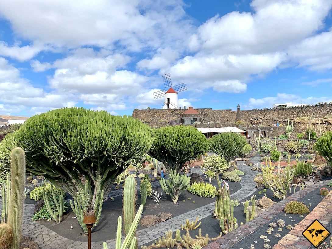 Lanzarote Kaktusgarten Mühle