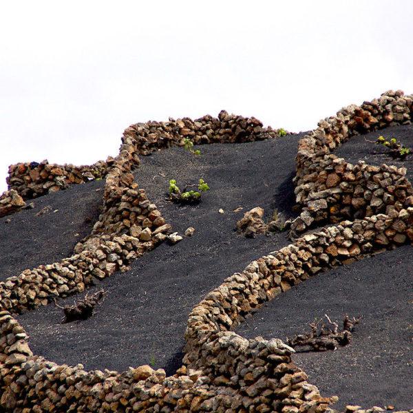 Die Steinvorrichtungen sorgen dafür, dass die Weinsträucher gut wachsen können