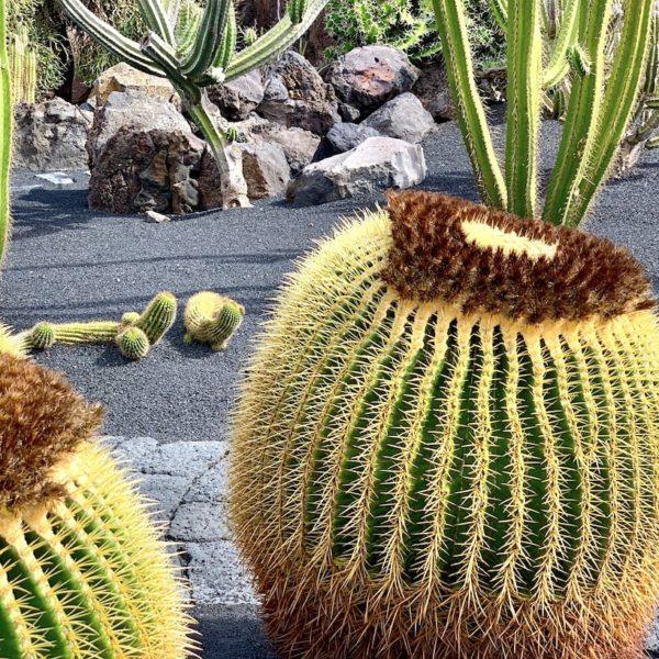 Lanzarote Sehenswürdigkeiten: Jardín de Cactus