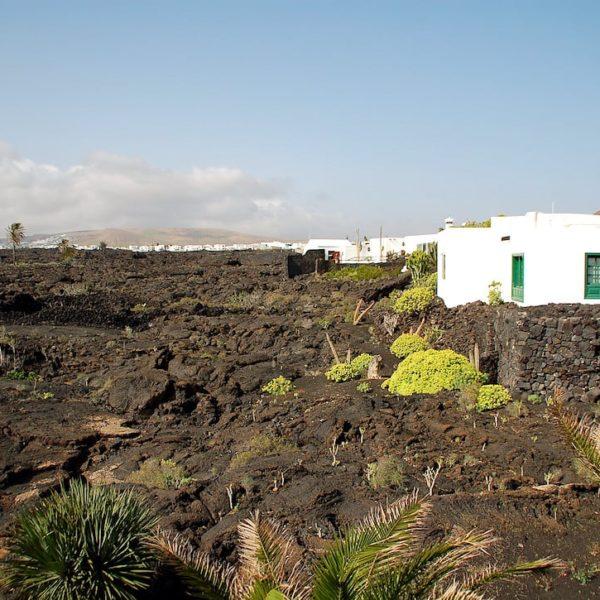 Lavastrom Pflanzen Fundación César Manrique Lanzarote