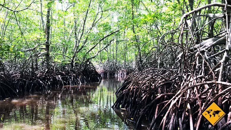Lembongan Bali Mangroven