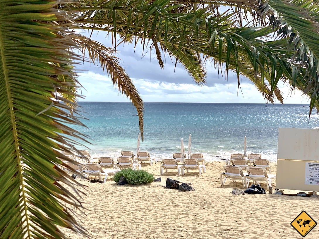 Liegen Strand Palme Costa Teguise Lanzarote