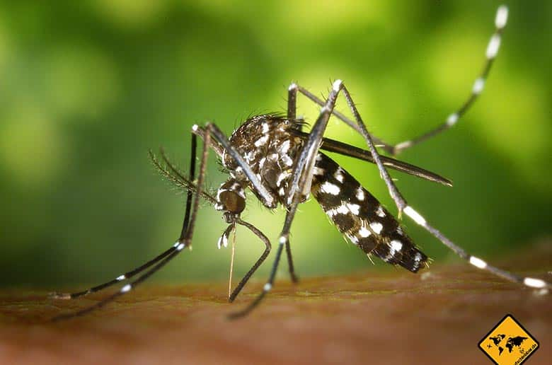 Lombok Malaria Mücke