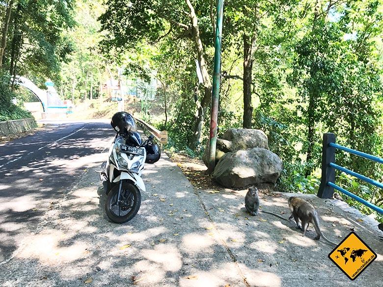 Lombok Urlaub Tipps Affenwald