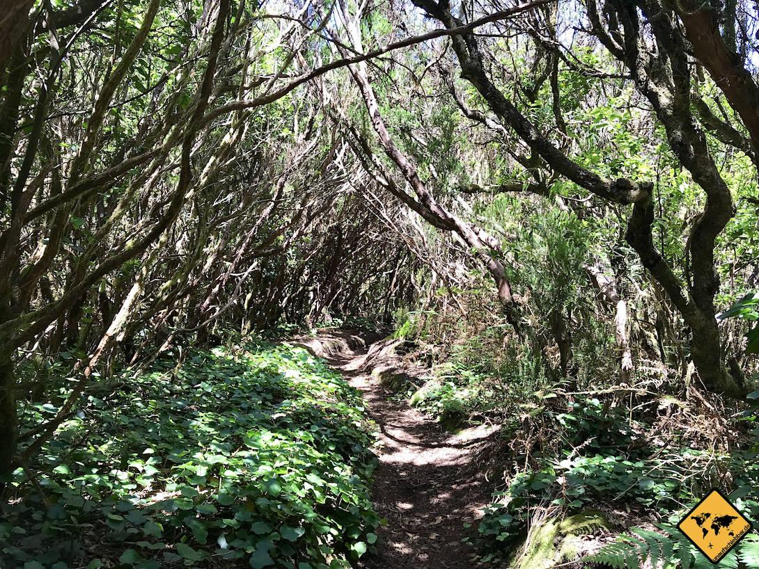 Die Lorbeerwälder sind quasi das Markenzeichen des Anaga Gebirge Teneriffa