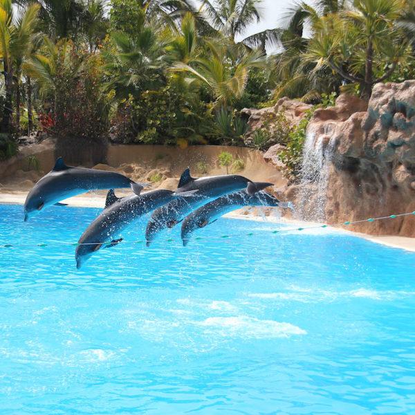 Loro Parque Puerto Cruz Delfine
