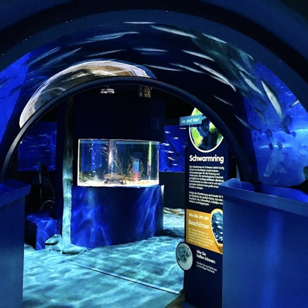 Makrelen Schwarmring Eingang