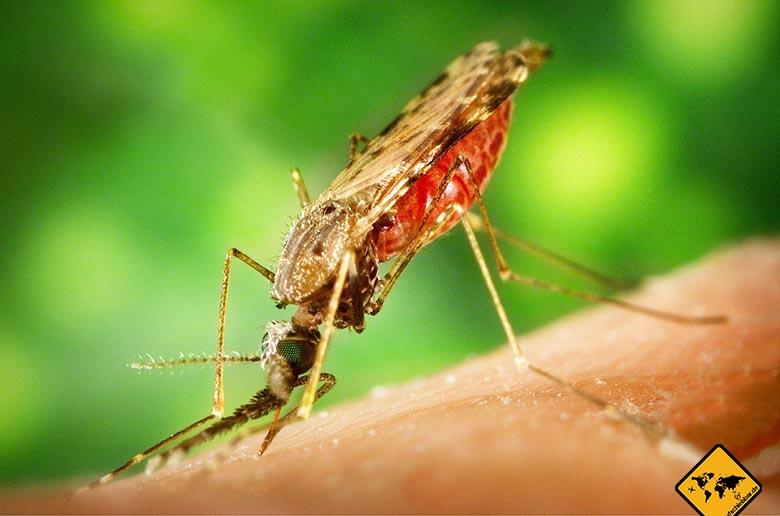 Malaria Lombok Übertragung