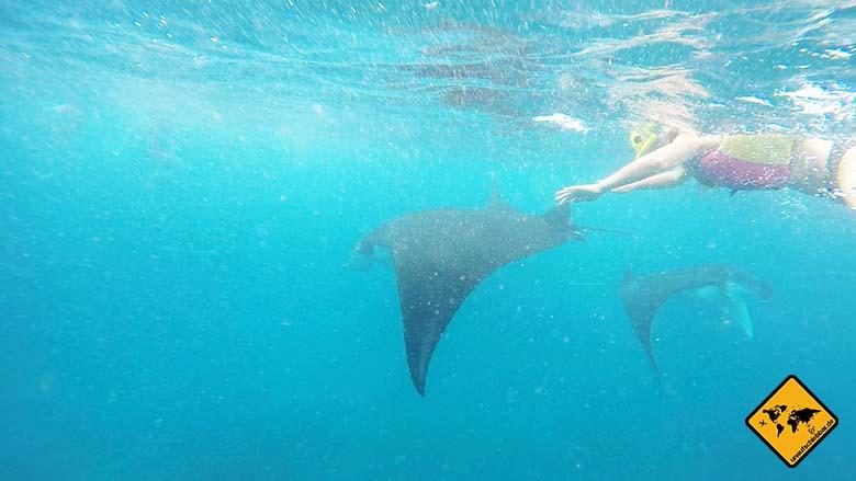 Manta Bali schnorcheln Schwimmweste