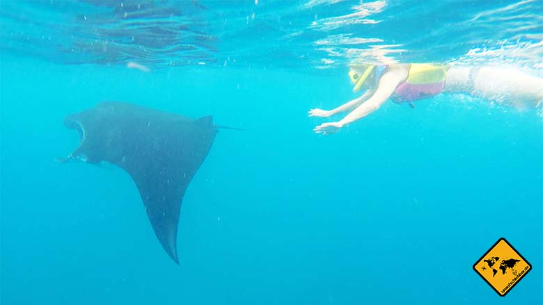 Manta Point Bali schnorcheln
