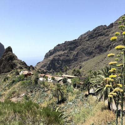 Auch im Hochsommer kannst du blühende Pflanzen in der Masca Schlucht Teneriffa erwarten