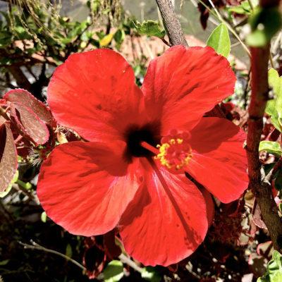 Auch wenn die Masca Schlucht Teneriffa überwiegend karg ist, findest du dennoch einige hübsche Blüten