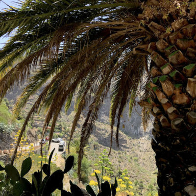Auch einige Palmen kannst du in der Masca Schlucht Teneriffa finden