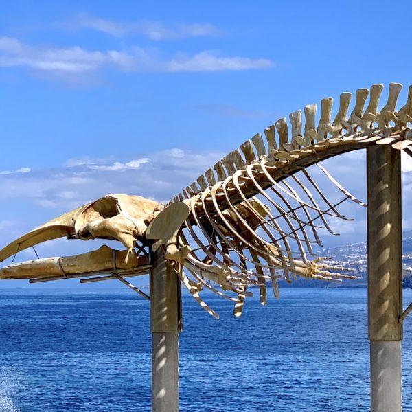 Meer Skelett Wal Teneriffa Los Silos