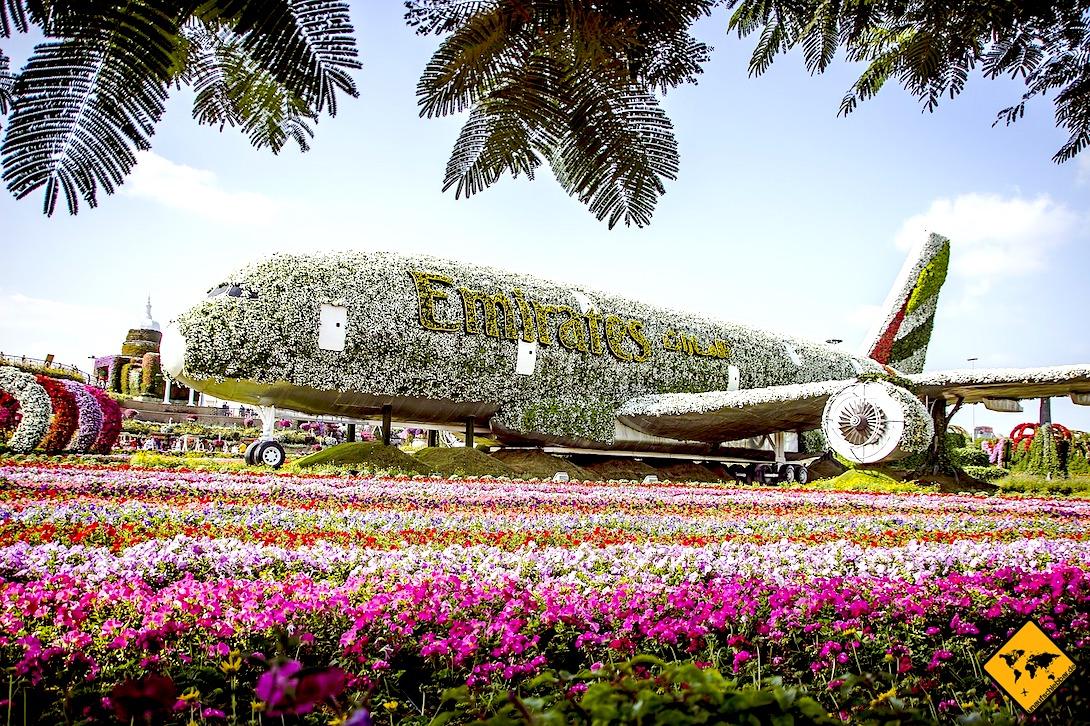 Miracle Garden A380 Blumen Flugzeug