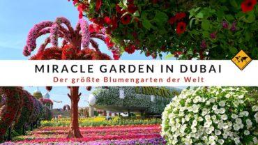 Miracle Garden in Dubai – 6 Dinge, die du vor deinem Besuch wissen musst