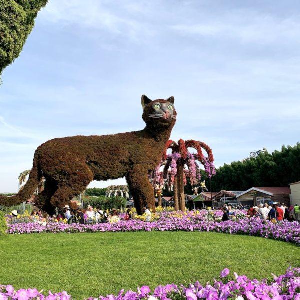 Miracle Garden in Dubai Katze