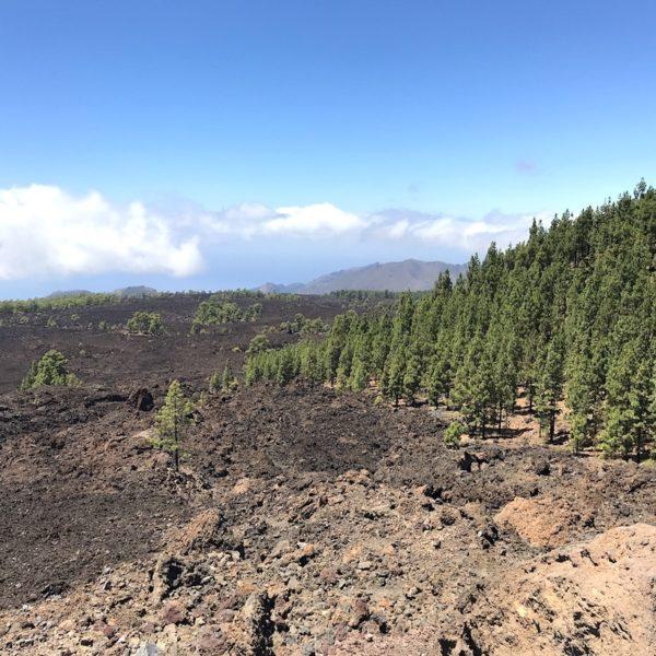 Mirador de Los Poleos Lava Pinien Nationalpark Teide