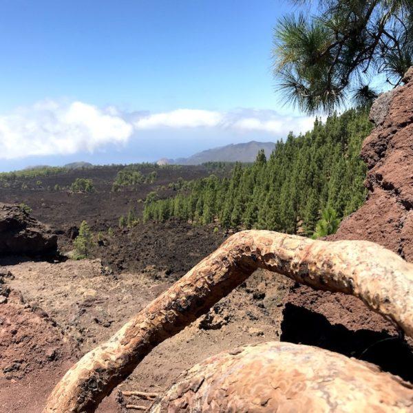 Mirador de Los Poleos Teide Nationalpark