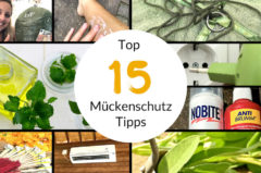 Mückenschutz auf Reisen und zuhause – 15 Tipps und Schutzmittel