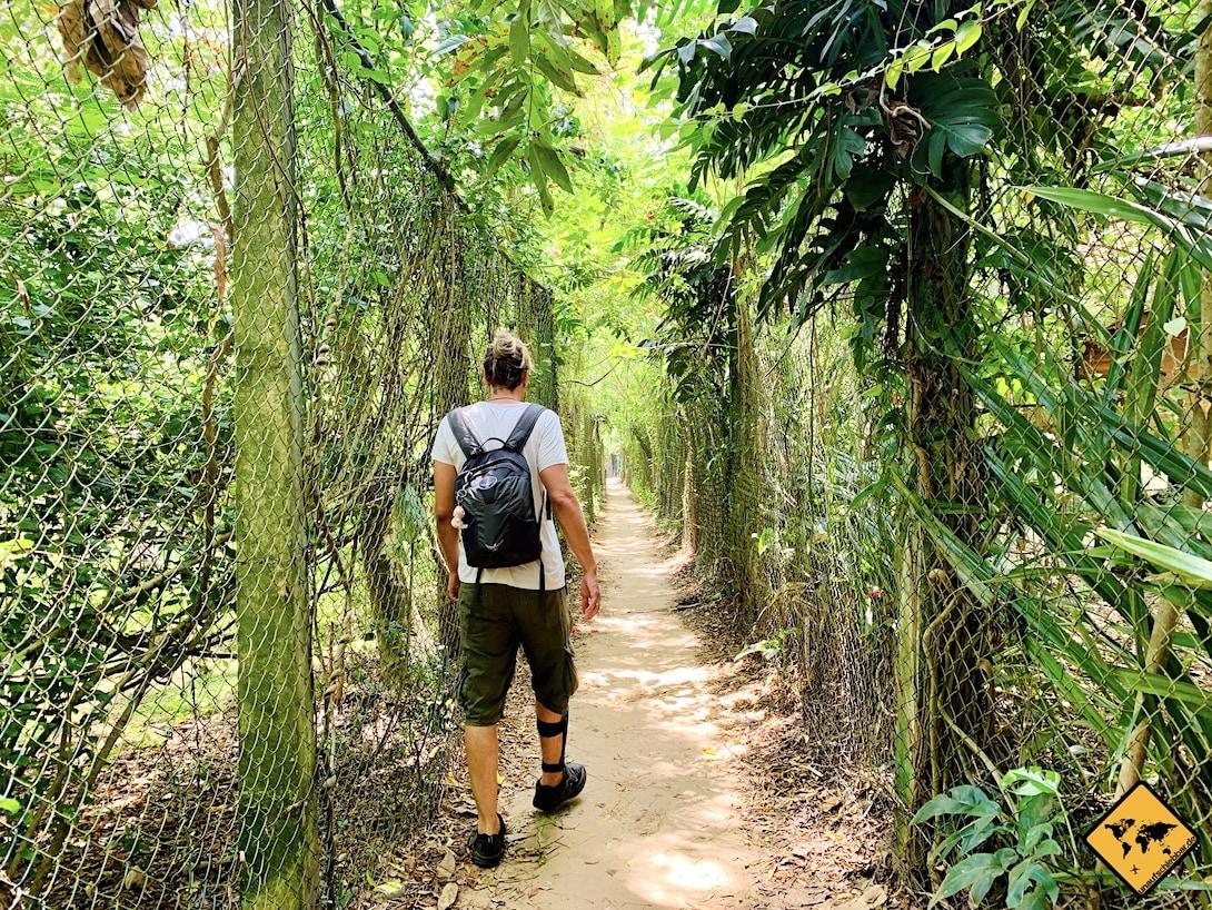 Mückengebiet Tropen Sri Lanka