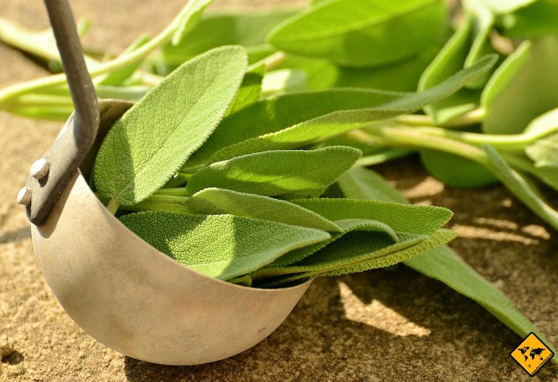 Wenn du Salbei-Blätter zum Glimmen bringst, ist dies ebenfalls ein guter Mückenschutz