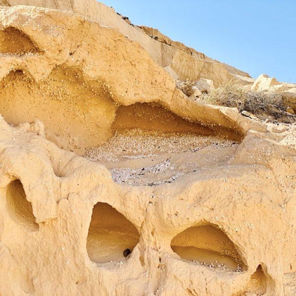 Muscheln Sandsteine Barranco de los Enamorados Fuerteventura