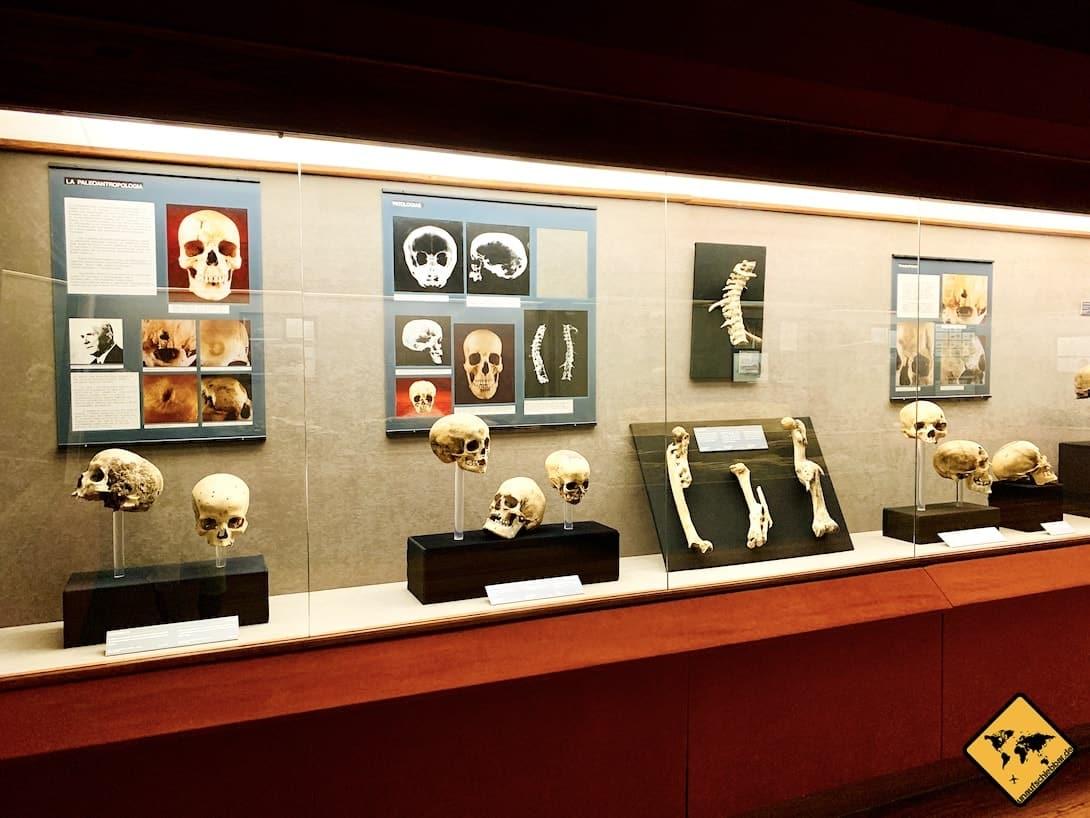 Museo Canario Totenköpfe Ausstellung