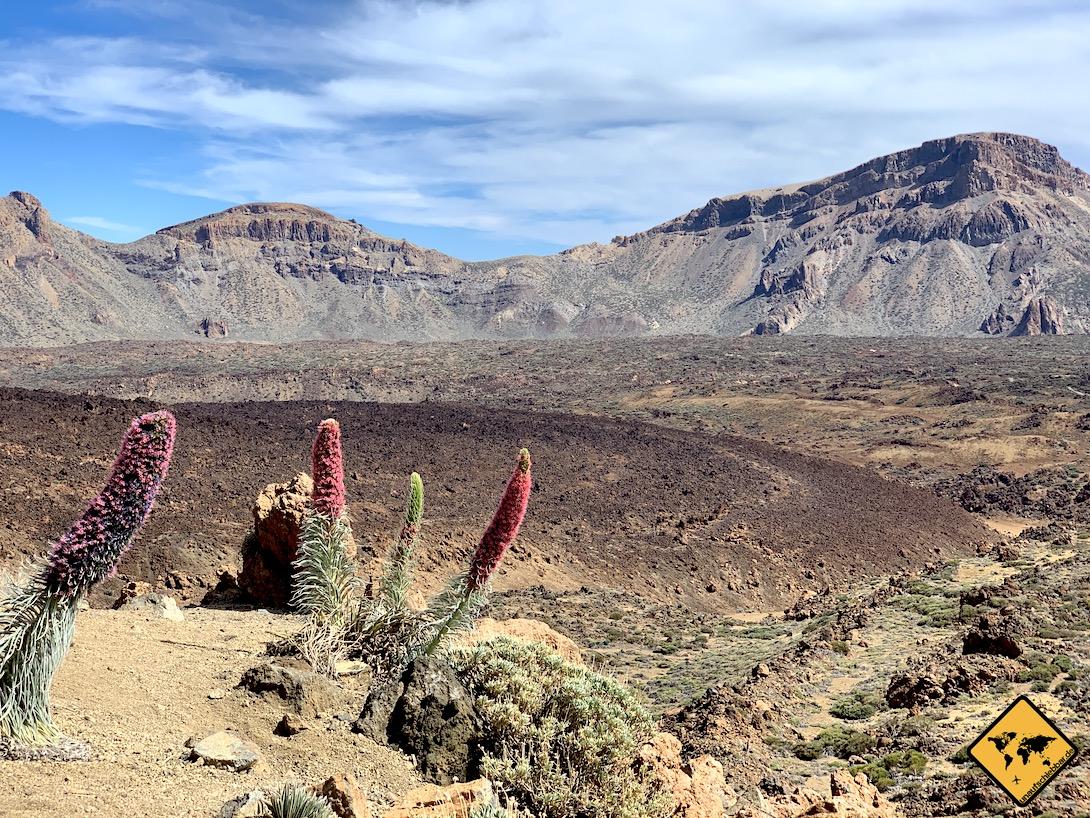 Nationalpark El Teide Tajinasten