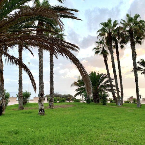 Natur Costa Adeje Teneriffa
