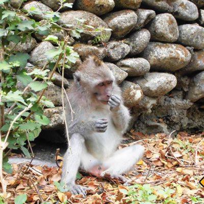 Nicht nur die Affen wissen die Gerüche in Bali zu schätzen