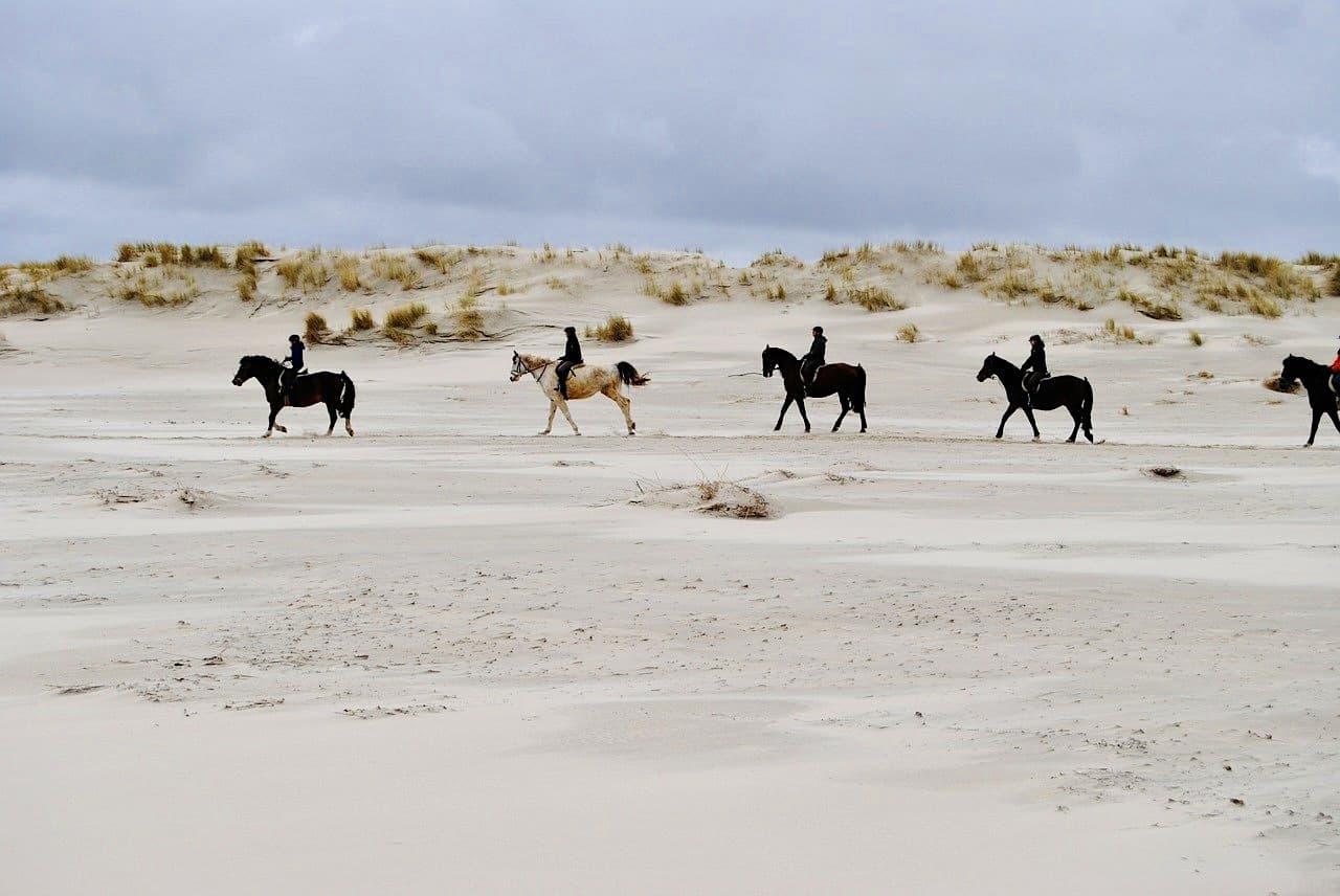 Nordsee Strand Spiekeroog Pferde reiten