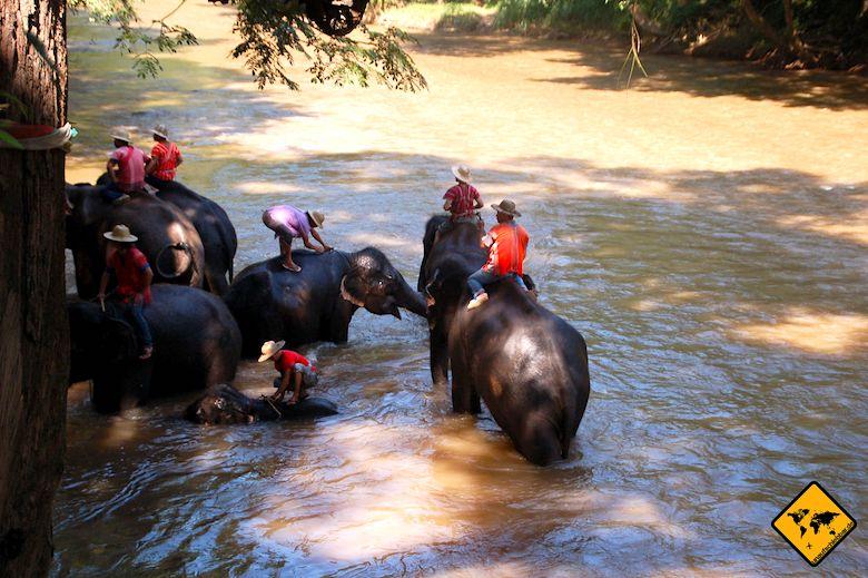 Nordthailand Elefanten baden