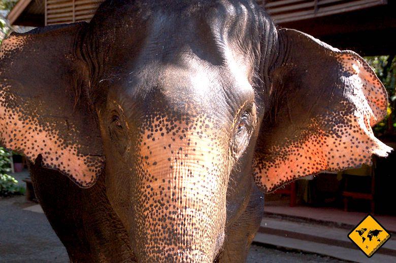 Nordthailand Elefantencamp