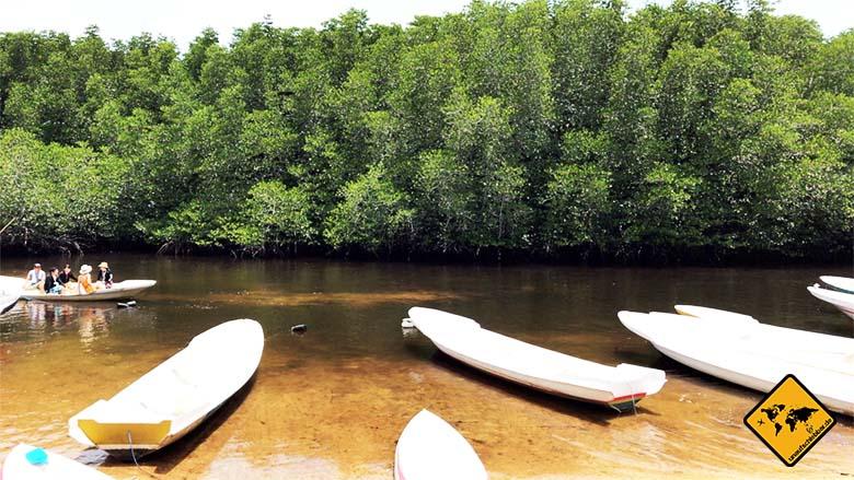 Nusa Lembongan Bali Mangroven Safari