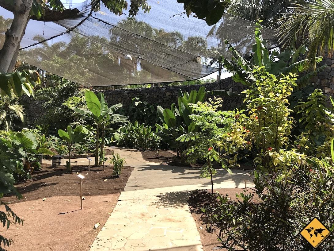 Octogono Palmetum Santa Cruz Weg