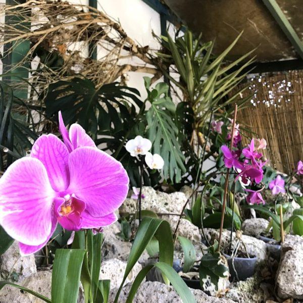 Orchideen Sito Litre Garten Puerto Cruz