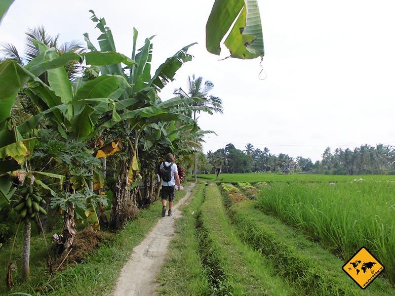 Osprey Farpoint 70 Test Bali Reisfelder Daypack