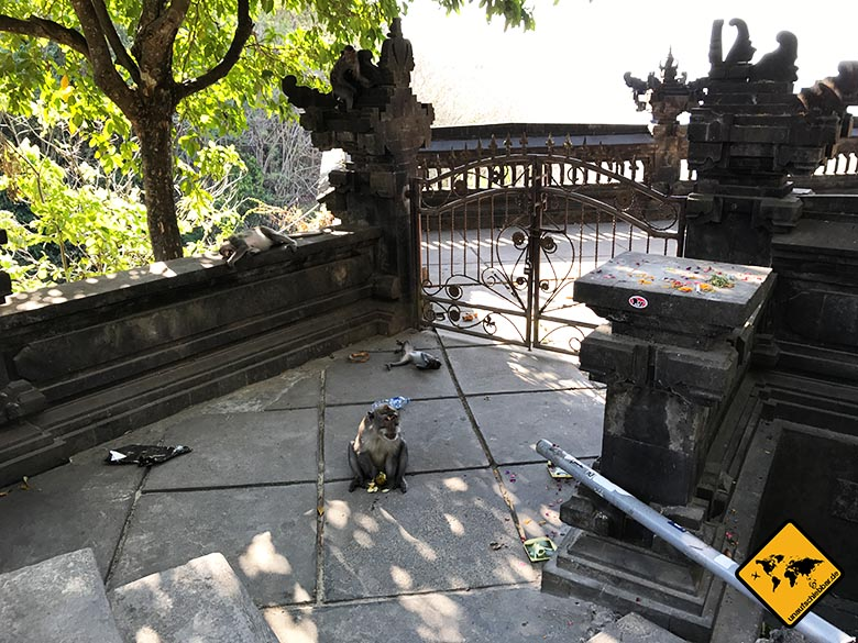 Padang Padang Bali Affen
